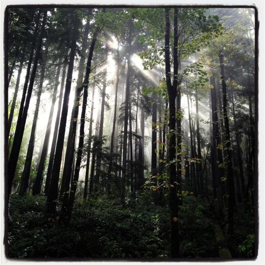 Forrest Park