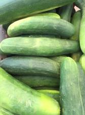 Blog Cucumbers
